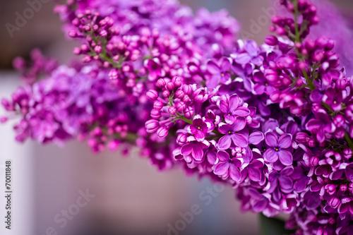 Plexiglas Lilac blumen