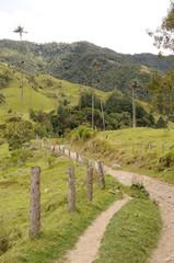 Colombia - Valle de Cocora - Quindío