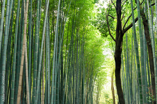 Papiers peints Bambou Bamboo grove, bamboo forest at Arashiyama, Kyoto, Japan