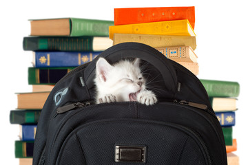 Kitten yawns after sleep. kitten sitting in a school backpack.