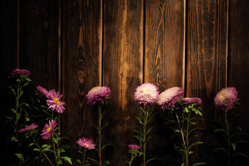 Spring Blossom over wood background. Flowers on wooden backgroun