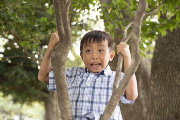 Boy sits on a branch of a tree