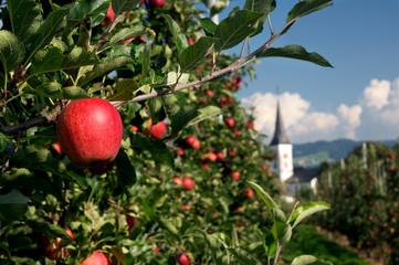 Apfel am Baum auf Plantage