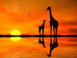 canvas print picture - Silhouettes of two giraffes against African sunset