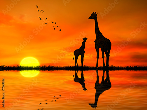 canvas print picture Silhouettes of two giraffes against African sunset
