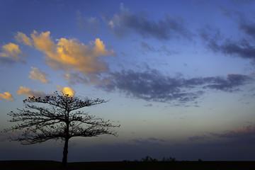 Fiery Tree Sunrise