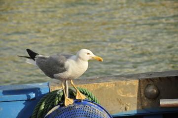 Möwe auf einem Fischerboot
