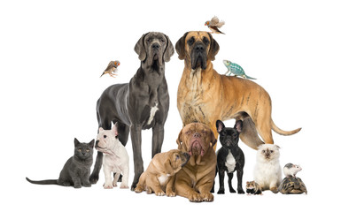 Group of pets - Dog,cat,bird,reptile,rabbit