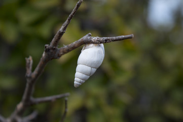 Snail ready for winter