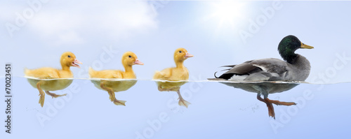 Duck family floating in a raw