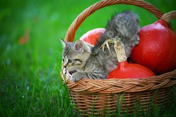 Mały kotek w koszyku z dyniami