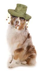 Australian dog