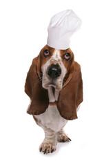 basset hound wearing chefs hat