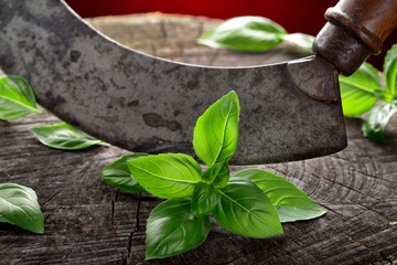 Basil leaves curved kitchen chopper