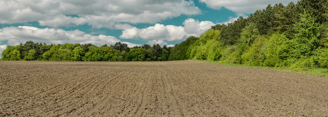Spring field before sowing