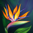 strelitzia bird of paradise flower botanical illustration - 70028661