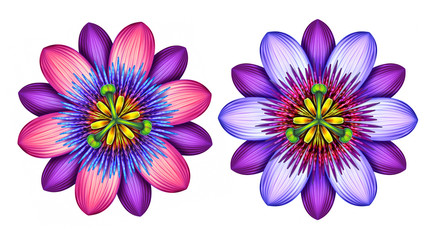 abstract passion flowers illustration isolated on white