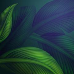 tropical green jungle leaves background illustration