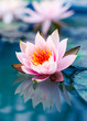 beautiful pink waterlily or lotus flower in pond - 70028808