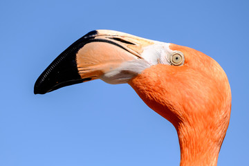 A Flamingo Bird