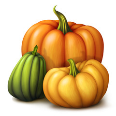 autumn pumpkins, seasonal illustration isolated