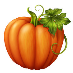 orange pumpkin with green leaf, illustration
