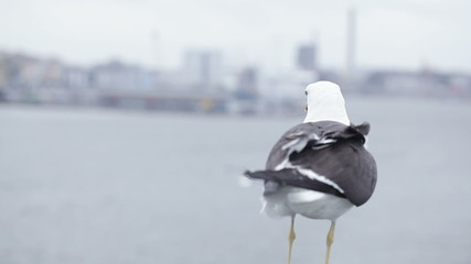 Seagull on city background