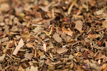 Mix of Dried Spices Texture
