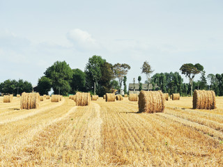 landscape with haystack rolls on harvested field
