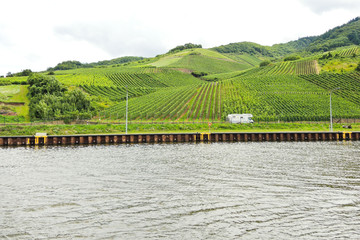 Moselle riverbank and vineyards, Germany
