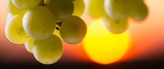 Grape illuminated by the sunlight - autumn scene