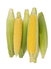corn cobs isolated on white