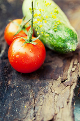 Fresh vegetables harvest. Tomatoes and gherkins, toned