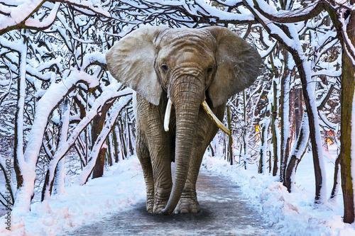 Leinwandbild Motiv Elephant walking in snowy park scenery