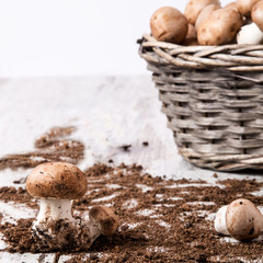 funghi in un cesto su tavolo di legno