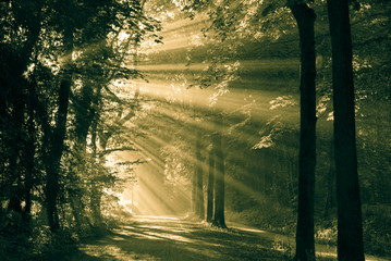 Sun rays shining through the trees, vintage look.