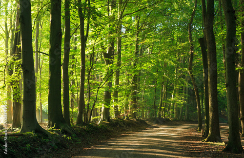 Fotobehang Noord Europa Late summer morning at a lane in the forrest.