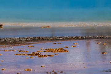 Geyser Bacteria Close-up
