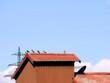 canvas print picture - Tauben auf Dach