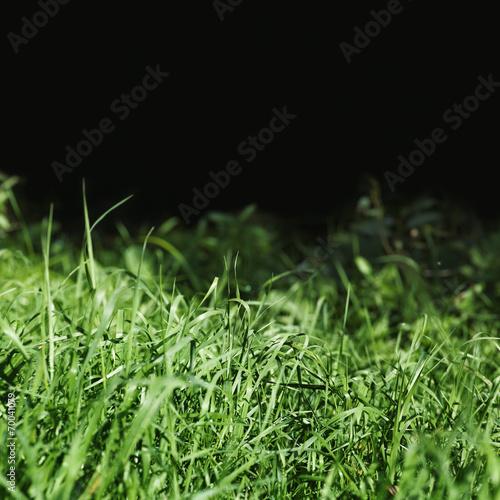 grass on black background