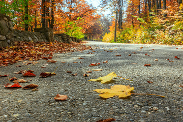 road in autumn beech landscape