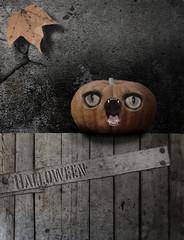 Kürbis Halloween Zaun