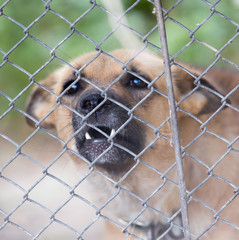 angry dog ​​behind a fence