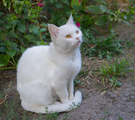 Portrait of guarded white cat