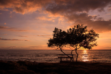 Single tree and a bench right in front of the sea, facing awesom