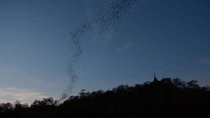 Bats flying from a cave in the evening, thailand. HD
