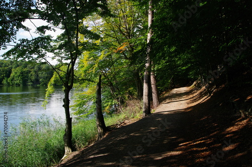 canvas print picture Herbstlicher Wald am Möllner See 3