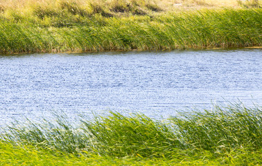 green reeds on Lake Outdoors