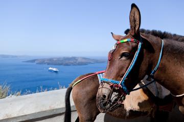 Donkeys in Fira on the Santorini island, Greece.