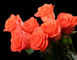Bouquet of beautiful roses on black background